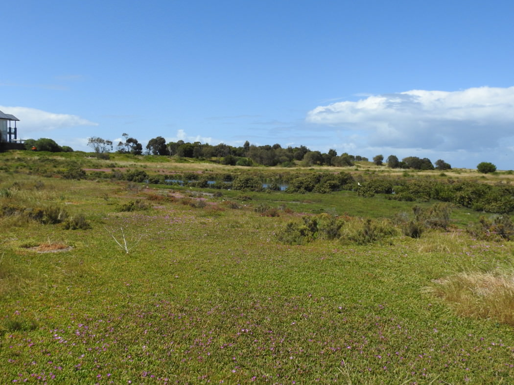 Paisley-Challis wetlands eastern side